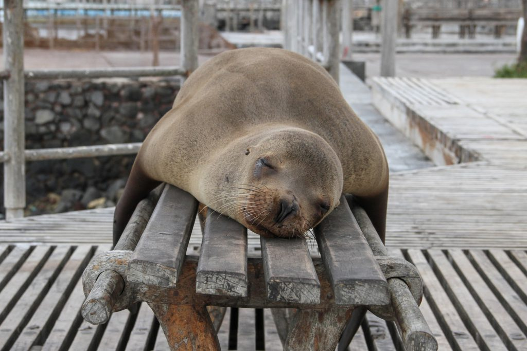 a walrus sleeping